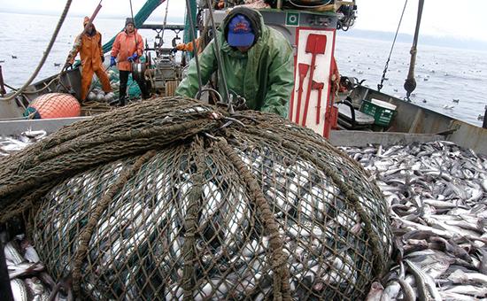 Краткий обзор обстановки на промысле минтая в Охотском море