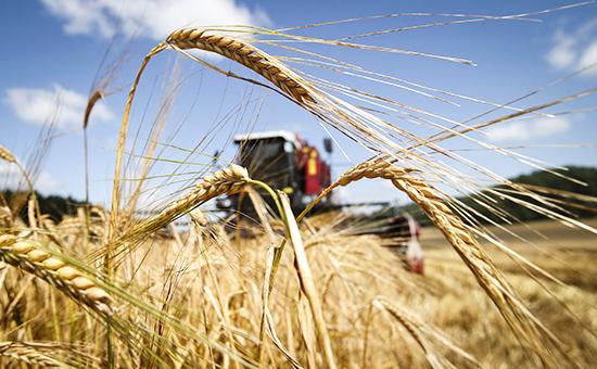 Правительство ввело экспортную пошлину на пшеницу с 1 февраля