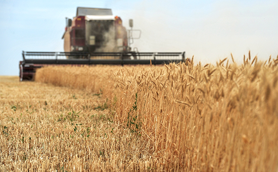 Экспортеры прекратили закупку зерна в России